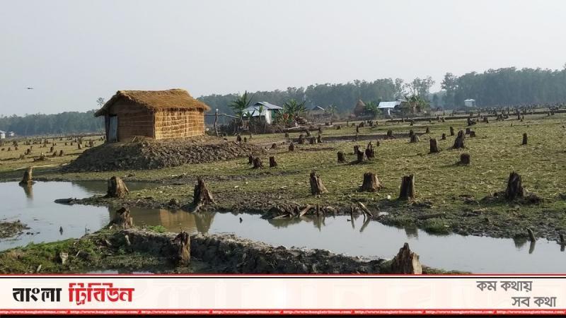 নিঝুম দ্বীপের বন সাবাড় করছে বন্দোবস্তপ্রাপ্তরা
